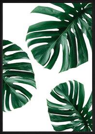 アートフレーム モンステラ1 PLANT FILE Monstera 1 ipf-61134 絵画 壁掛け おしゃれ 送料無料 あす楽