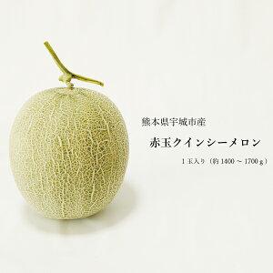 送料無料 熊本県産 クインシーメロン 赤肉 1玉 ギフト用 農家直送 贈答用 贈り物 母の日 父の日