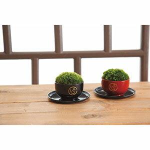 ミニ盆栽 苔玉