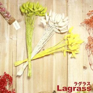 『パセオ ラグラス 20g XJ-26』【フラワー アレンジメント プリザーブドフラワー ハーバリウム DIY インテリア 雑貨 PASEO】