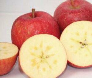 まさひろ林檎園のこだわり「りんご」(葉とらずサンふじ)「家庭用・贈答用」及び「5Kg入り・10Kg入り」は選択願います)