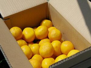 「小夏(柑橘類)」(贈答用)3Kg(M〜Lサイズ18〜27個入り)(送料込)(有機肥料で育てた)(5月7日から出荷)