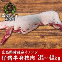 広島県備後産猪肉仔猪半身枝肉