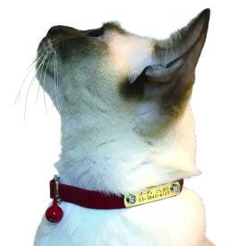 【送料無料】【BIRDIE(バーディ)猫用迷子防止首輪】名前と電話番号を刻印してお届けする CAT IDカラー(バックル外れるタイプ)