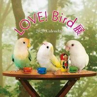 tokyoShiori/LOVE!Bird展2020年カレンダー/コザクラインコ/245A0239ネコポス対応可能(