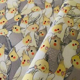 アトリエRumiYumi/カットクロス オカメインコぎゅうぎゅう / 232A0944 ( BIRDMORE バードモア CRAFT GARDEN 鳥用品 鳥グッズ 雑貨 カバン バッグ グッズ 鳥 とり トリ インコ プレゼント )