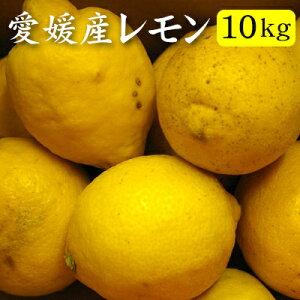 【訳あり】愛媛産レモン10kg(約65〜90玉)『安心・安全がうれしい国産レモン!』【送料無料】