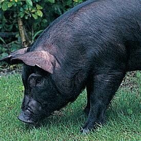 【お中元ギフト2019にも!】沖縄・やんばる島豚・やんばる豚3種セット(しゃぶしゃぶ&焼肉バラ&細切れ)[送料無料]