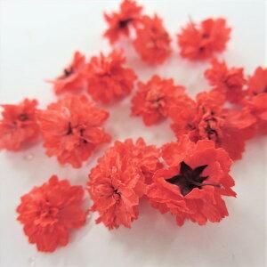 ドライフラワー 八重コデマリ 赤色 /ハーバリウム 花材 レジン