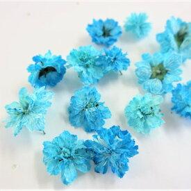 ドライフラワー 八重コデマリ 青色 /ハーバリウム 花材 レジン