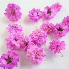 ドライフラワー 八重コデマリ ピンク色 /ハーバリウム 花材 レジン