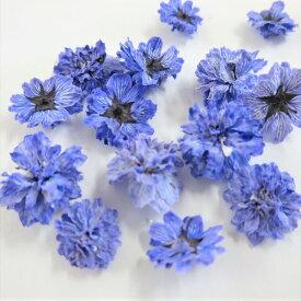 ドライフラワー 八重コデマリ 紫色 /ハーバリウム 花材 レジン