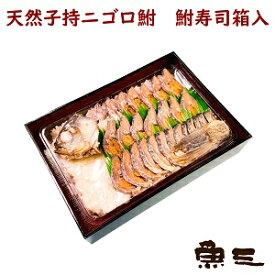 天然子持ニゴロブナ 鮒寿司(ふなずし)4300箱入