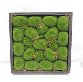 壁面造花ディスプレイ モコモコ (人工植物/アートフレーム/グリーン)