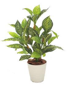 ダニアプラント 高さ60cm (造花 インテリア おしゃれ 室内 ミニサイズ フェイクグリーン 作り物 装飾 ディスプレイ 飾り)