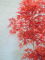 モミジレッド150cm(造花/人工観葉植物/紅葉/緑/和風/ガーデニング/造園/庭園/坪庭/エクステリア)
