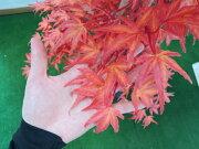 モミジレッド150cm(造花観葉植物紅葉緑和風ガーデニング造園庭園坪庭エクステリア)