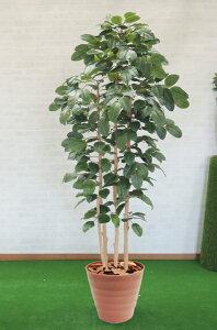 菩提樹 210cm (人工 観葉植物 造花 ボダイジュ インテリア おしゃれ 室内 大型 装飾 ディスプレイ 店舗 飾り)