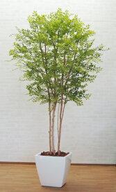 大型サイズの人工観葉植物 明るい葉のトネリコ 高さ230cm(インテリア 造花 樹木 造木 フェイクグリーン 室内向け ゴールデンリーフ)