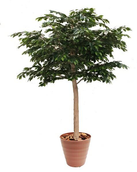 大型サイズのベンジャミン立ち木 高さ260cm 組み立て式(人工観葉植物 造花 樹木 造木 インテリア おしゃれ 室内)
