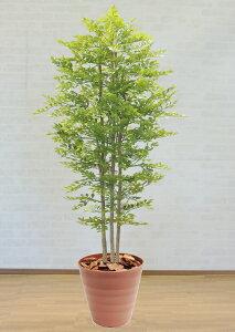明るい葉のトネリコ 180cm (造花 インテリア おしゃれ 室内 人工 観葉植物 大型 フェイク グリーン プランツ 装飾 ゴールデンリーフ 1.8m 鉢植え)