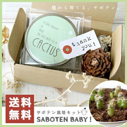 【送料無料】SABOTEN BABY!【サボテン/栽培セット/栽培キット/ガーデニング】