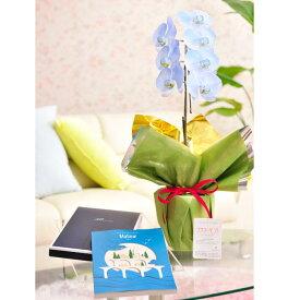 花とギフトのセット 選べる花色のカラー胡蝶蘭 彩 -irodori- 1本立(寒色系)とカタログギフト(ミストラル/マロウ)結婚祝い 就任祝い 退職祝い 誕生日 贈り物 フラワーギフト プレゼント ギフトカタログ お祝い お花 送料無料 メッセージカード無料 あす楽