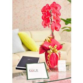 花とギフトのセット 選べる花色のカラー胡蝶蘭 彩 -irodori- 1本立(暖色系)とカタログギフト(ミストラル/セーブル)結婚祝い 就任祝い 退職祝い 誕生日 贈り物 フラワーギフト プレゼント ギフトカタログ お祝い お花 送料無料 メッセージカード無料 あす楽