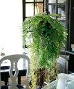 Fiorira un Giardino インテリアグリーン・ハンギング・ファーン/ 造花 フェイクグリーン インテリア 人工観葉植物 シダ 寄せ植え コケ玉