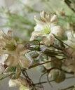 IB Laursen インテリアグリーン・e/IB フェイクグリーン フラワー 造花 雑貨 北欧 ディスプレイ デンマーク ナチュラル デコレーション