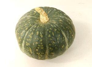 【送料無料】【朝市場の新鮮野菜】南瓜 6玉サイズ 1個 x2個セット