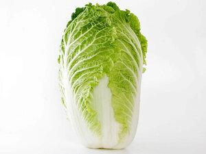 【朝市場の新鮮野菜】白菜 6玉サイズ 1個