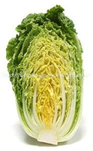 【フルヤの有機野菜】ミニ白菜 1玉 国産
