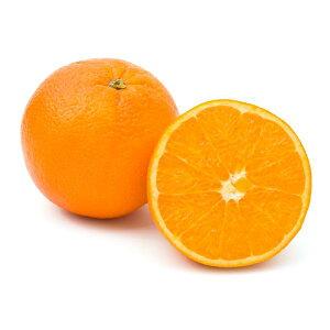 【朝市場の新鮮野菜】オレンジ...