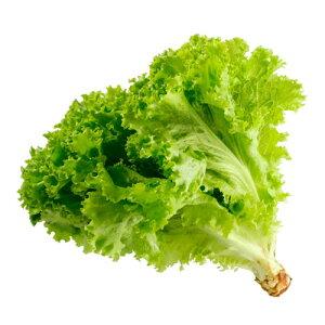 【送料無料】【朝市場の新鮮野菜】サニーレタス 1個 x2個セット