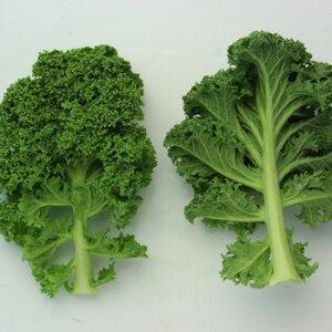 【ムソーの安心野菜】【冷蔵】カリーノケール(緑) 120g 無農薬