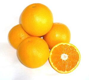 【フルヤの安心フルーツ】特別栽培 バレンシアオレンジ 10kg