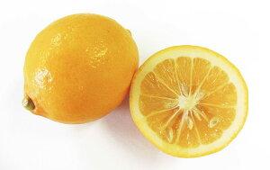 【フルヤの安心フルーツ】有機JAS マイヤーレモン 10kg