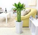【送料無料】幸せの開運竹ラッキー7の¥7777(税抜き)スクエアホワイト陶器鉢 Gタイプ