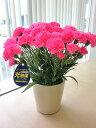 光触媒 カーネーション ピンク アートフラワー 送料無料 ミニ 空気清浄機 造花 アレンジ 母の日 ギフト プレゼント 贈り物