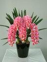 シンビジューム ピンク Mサイズ 5本 光触媒アートフラワー(造花) 贈り物・母の日・新築祝・開店祝・誕生日・記念日・卒業式・入学…