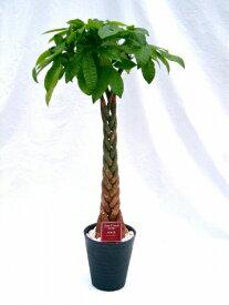パキラ 10号(1尺鉢)観葉植物 ずんぐり幹に、手を広げたような葉が魅力の観葉植物 トロピカル感満点の育て易いインテリアグリーンです。【smtb-s】