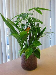 ハイドロカルチャー寄せ植え(ハイドロボール)かわいい透明プラスチック鉢に寄せ植えした観葉植物です。ハイドロボールは無菌・無臭でとても清潔なので、いろいろな場所に飾って楽し