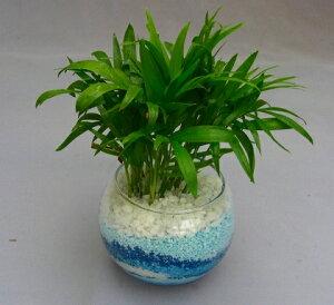 ハイドロカルチャー観葉植物(カラーサンド)2鉢セット バブ10 手作りのため世界にひとつだけの模様です。お部屋のインテリアや贈り物に最適です。