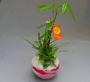 ハイドロカルチャー寄せ植え(カラーサンド)2鉢セット バブ12 手作りのため世界にひとつだけの模様です。お部屋のインテリアや贈り物に最適です。