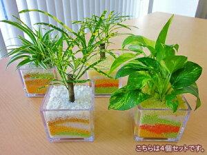 ハイドロカルチャー観葉植物 スクエア(4個セット)ミニサイズのスクエア鉢にペットボトルが原料のカラーサンドを使用し、きれいでかわいい砂模様をデザインしました♪