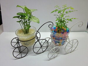 ハイドロカルチャー観葉植物 自転車 2個セット(ブラック・ホワイト) 素敵なデザインの自転車に観葉植物を植え込みました。インテリアのちょっとしたアクセントにオススメです。