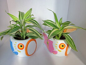 こいのぼり(ピンク・ブルー2個セット) 陶器鉢(ハイドロボール)健やかな成長を祈願するこいのぼりの陶器鉢にミニサイズの観葉植物を植え込みました。現在感覚を取り入れた明るいデザインで、五月の風情をコンパクトに演出します。