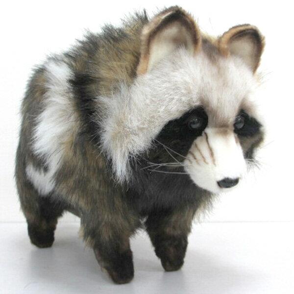 [ハンサ][7256]タヌキ(たぬき)-Racoon Dog-HANSAのリアルな動物ぬいぐるみです。