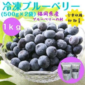 冷凍ブルーベリー 1kg  500g×2袋 国産 福岡県産 送料無料 完熟 果物 フルーツ 冷凍 今季収穫初物 アントシアニン